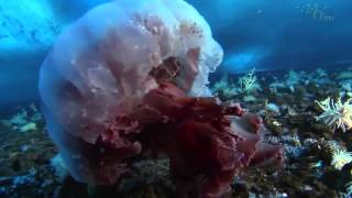 Animals in the Antarctic Ice HD