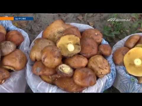 В Донецкой области начался грибной сезон