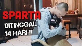 REAKSI SPARTA SETELAH DITINGGAL PERGI LAMA!