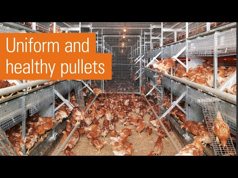 Big Dutchman: Efficient egg production in laying aviaries th