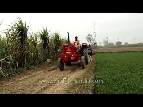Tractor in sugarcane fields of Uttar Pradesh
