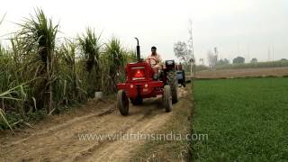 Tractor in sugarcane fields of Uttar Pradesh