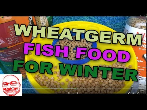 Wheatgerm Fish Food For Winter.