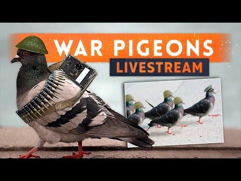 ► CATCH THE PIGEON!  Battlefield 1 War Pigeons stream
