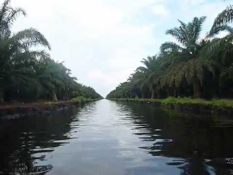 Sungai Guntung - Kebun Sawit di Tanah Gambut