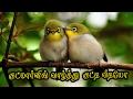 குட்மார்னிங் வாழ்த்து கவிதை குட்டி வீடியோ {Good morning Wishes Kavithai in Tamil Video} #072