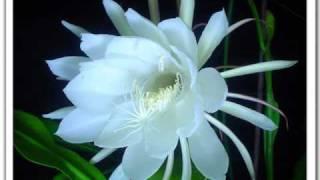 bhoomiye snehicha[neeyethra dhanya]audio only