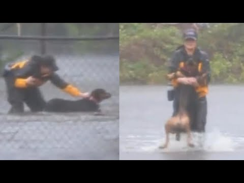 Reporter Covering Hurricane Florence Rescues Dogs in North Carolina