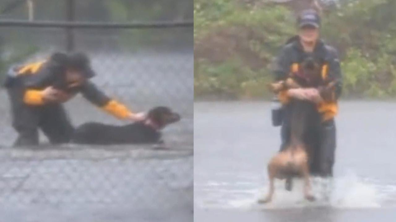 reporter-covering-hurricane-florence-rescues-dogs-in-north-carolina