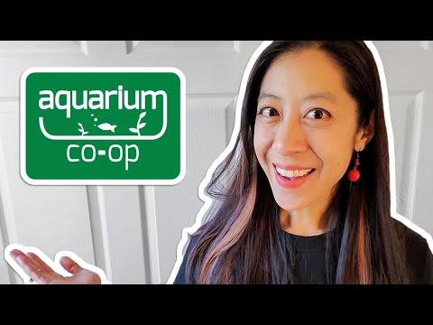 How I Got My Job At Aquarium Co-Op