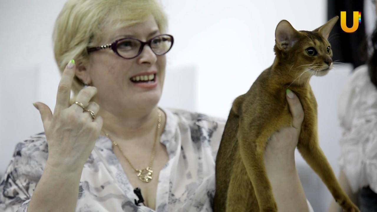 знакомства котов необычные