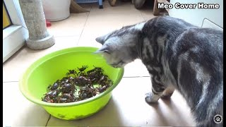 Funny Cat Play With Crabs