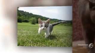 Красивые милые котята! Со смешными подписями!