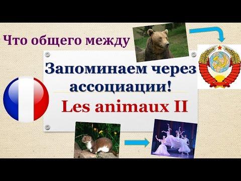 Урок#114: Учим животных по ассоциациям (II). Лексика. Французский язык