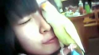 SKE48の高柳明音がペットのインコとじゃれてる映像です! 微笑ましいです!