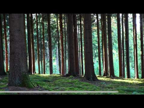 Der Reichswald - ein Wald mit langer Geschichteиз YouTube · Длительность: 7 мин32 с