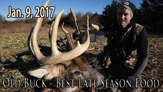 Old Buck - Narrow Rack, Best Late Season Food | Midwest Whitetail