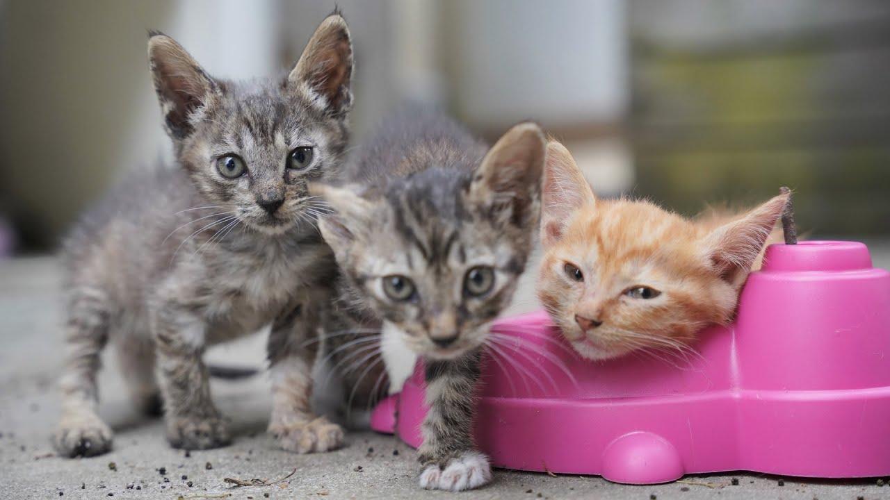 한달반 된 아기고양이들, 이 영상은 심장에 해롭습니다(1/2)