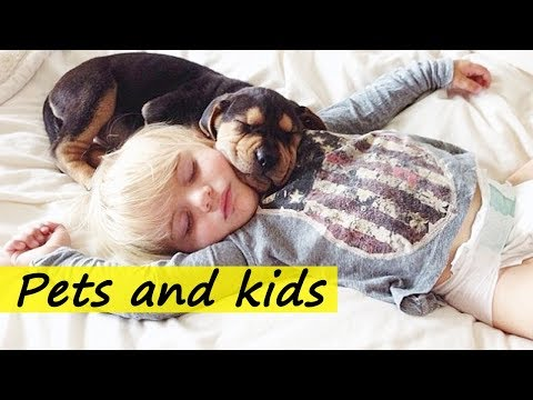 Pet vs Cute Baby - Funny babies annoying dogs