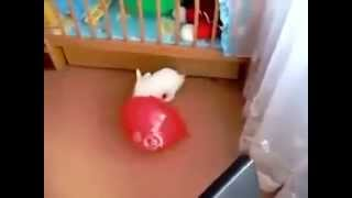 Funny video : Animals 2014