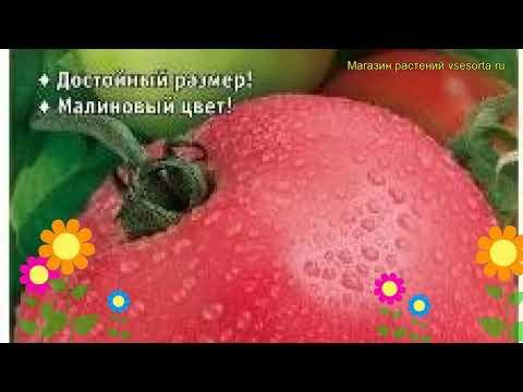 Томат обыкновенный Вано F1. Краткий обзор, описание характеристик, где купить семена