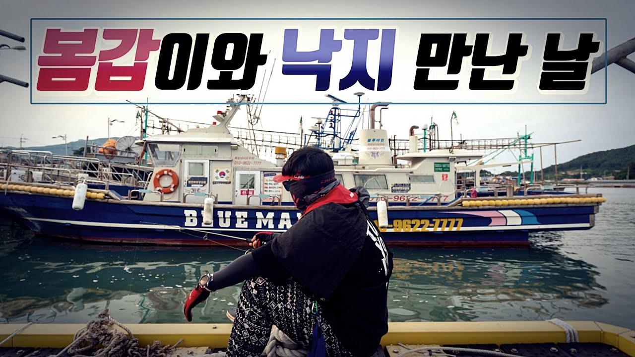봄갑이와 낙지 얼굴본날 - 장흥회진항 / 완도항 / 봄갑오징어 / 낙지
