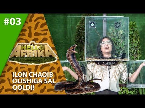 Hello Afrika 3-son Ilon Chaqib Olishiga Sal Qoldi!  (01.03.2020)