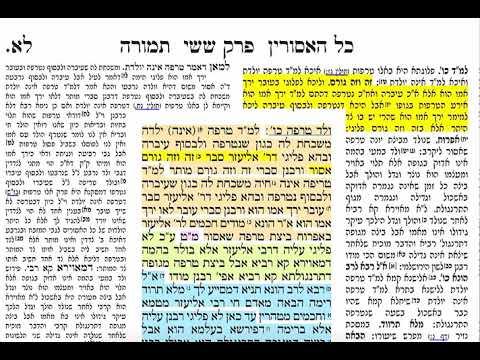 הדף היומי מסכת תמורה דף לא Daf yomi Temurah daf 31