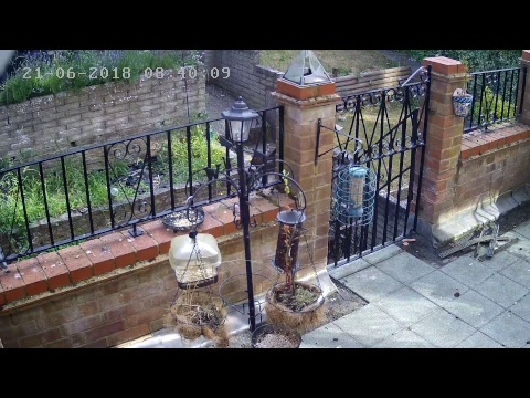 Birdcam - live from Luton