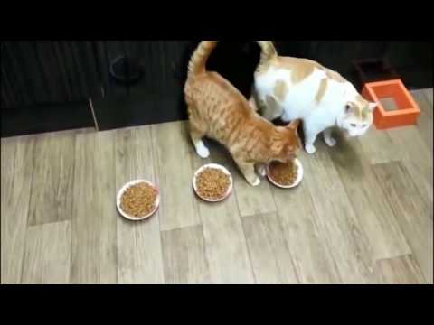 The funniest and most humorous cat videos ever! - Cats Being Jerks Compilation 2017 NEW