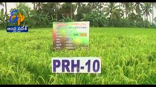 Successful basmati rice cultivation in East Godavri - జైకిసాన్ - on 2nd October 2014