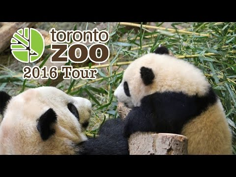 Toronto Zoo Tour - Giant Panda Cubs and More!