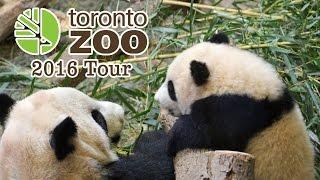 Repeat youtube video Toronto Zoo 2016 Tour - Giant Panda Cubs and More!