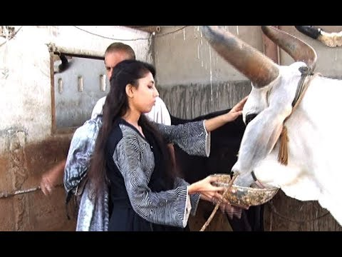 What happened when this girl giving fodder to a bull in Karachi - Watch video