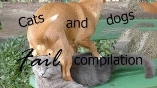 Cats and dogs fail compilation