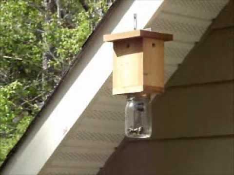 Carpenter Bee Cabins