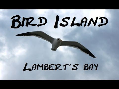Bird Island  - Lambert's bay