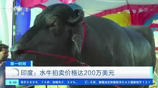 [第一时间]印度:水牛拍卖价格达200万美元| CCTV财经