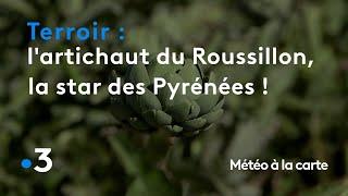 L'artichaut du Roussillon, la star des Pyrénées ! - Météo à la carte