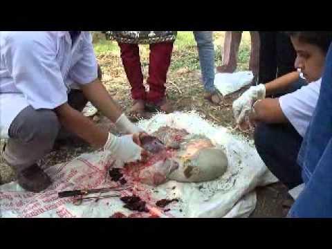 Post Mortem Of Goat Part 2 Youtube