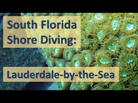 Florida Shore Diving:  Lauderdale-by-the-Sea