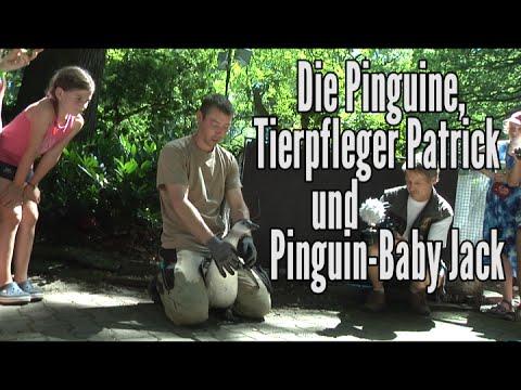 Kinder-Zoo-Film 2015, Folge 6: Die Pinguine, Tierpfleger Patrick und Pinguin-Baby Jack