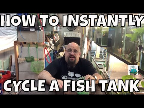 HOW TO INSTANT CYCLE A FISH TANK! WITHOUT WAITING!