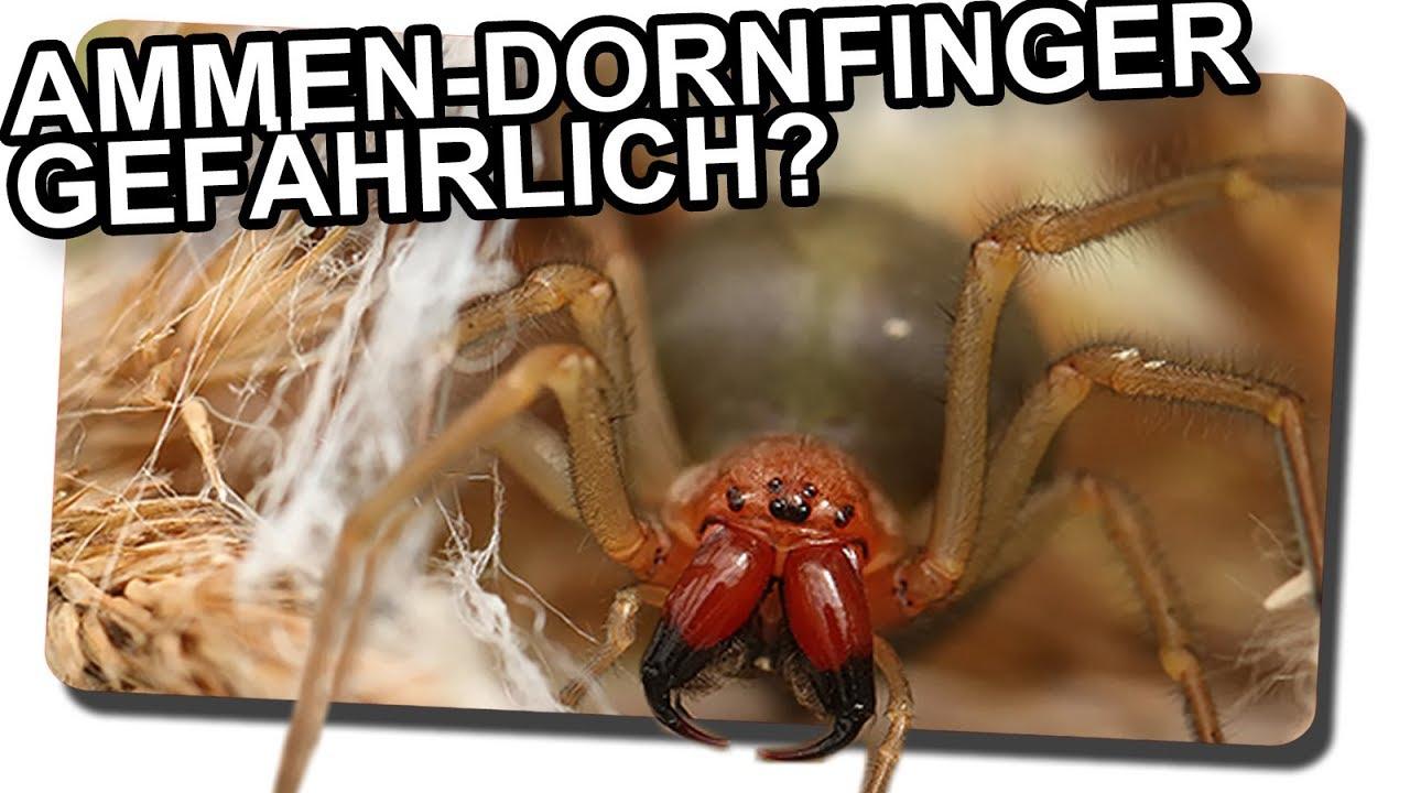 Dornenfinger
