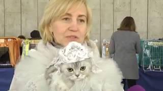 2018-03-27 г. Брест. Выставка кошек. Новости на Буг-ТВ. #бугтв