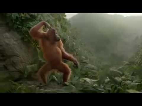 Lucu Monyet Goyang Lagu Nya( Sakit Nya Tuh Di Sini)cita-citata