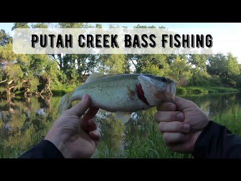 Bass Fishing At Putah Creek