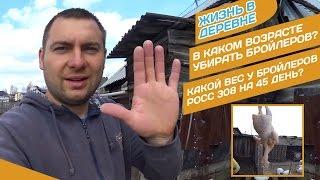 ВЕС БРОЙЛЕРА В 45 ДНЕЙ НА ЗЕРНОСМЕСИ