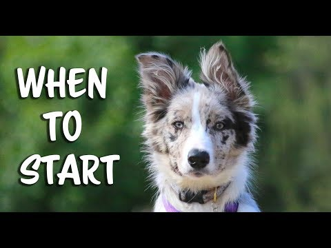 When to start training your puppy