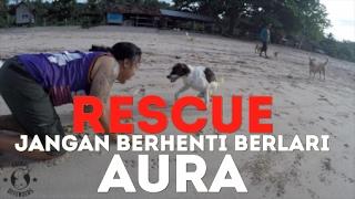 Please Follow: Instagram: @animaldefendersindo @doniherdaru Donate:...